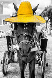 ¡Viva Mexico! B&W Collection - Horse with Yellow straw Hat Photographic Print by Philippe Hugonnard