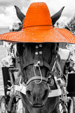 ¡Viva Mexico! B&W Collection - Portrait of Horse with Orange Hat Photographic Print by Philippe Hugonnard