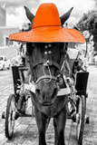 ¡Viva Mexico! B&W Collection - Horse with Orange straw Hat Photographic Print by Philippe Hugonnard