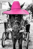 ¡Viva Mexico! B&W Collection - Horse with Pink straw Hat Photographic Print by Philippe Hugonnard