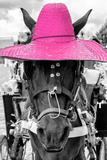 ¡Viva Mexico! B&W Collection - Portrait of Horse with Pink Hat Photographic Print by Philippe Hugonnard