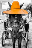 ¡Viva Mexico! B&W Collection - Horse with Light Orange straw Hat Photographic Print by Philippe Hugonnard