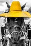 ¡Viva Mexico! B&W Collection - Portrait of Horse with Yellow Hat Photographic Print by Philippe Hugonnard