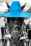 ¡Viva Mexico! B&W Collection - Portrait of Horse with Blue Hat Photographic Print by Philippe Hugonnard