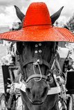 ¡Viva Mexico! B&W Collection - Portrait of Horse with Red Hat Photographic Print by Philippe Hugonnard