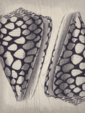 Coquille I Impressão giclée por Maria Mendez