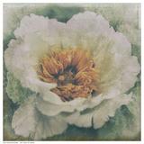 Nostalgic Peony Blossom Prints