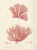 Nitophyllum greville Giclee Print by Henry Bradbury