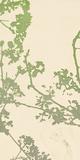 Nature Florets Giclee Print by Sarah Cheyne