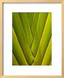 Detail of Palm Leaf Framed Photographic Print by Guylain Doyle
