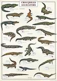 Crocodiles And Alligators Of The World Plakaty