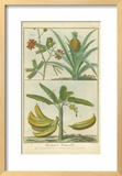 Histoire Naturelle Tropicals II Art by  Martinet
