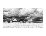 Five White Barns Poster by Trent Foltz