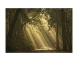 L'esprit du soleil Posters by David Lorenz Winston