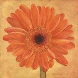 Orange Gerber Prints by Stephanie Marrott
