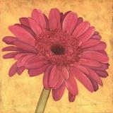 Pink Gerber Prints by Stephanie Marrott