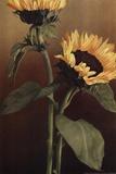Isabell's Garden II Art by Kory Fluckiger