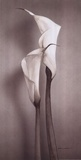 Twin Callas II Prints by Kory Fluckiger