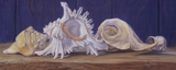 Shells I Posters by Lucie Bilodeau