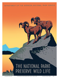 The National Parks Preserve Wild Life - Bighorn Sheep Art by J. Hirt