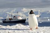 Gentoo Penguin (Pygoscelis Papua) And Antarctic Cruise Liner 'Mv Ushuaia' In Neko Harbour Photographic Print by Enrique Lopez-Tapia