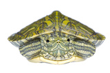 Red-Eared Slider (Trachemys Scripta Elegans) Juvenile Portrait Photographic Print by Seth Patterson
