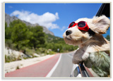 Road Trip Happy Dog with Red Sunglasses Wood Sign
