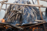 Government 6 Tonne Ivory Burn - 6 Million Dollars Worth Of Elephant (Loxodonta Africana) Tusks Photographic Print by Steve Taylor