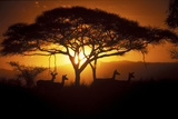 Herd Of Impala (Aepyceros Melampus) Silhouetted At Sunset, Ngorongoro Conservation Area, Tanzania Photographic Print by Juan Carlos Munoz