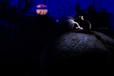 Deer Mouse (Peromyscus Maniculatus) On Giant Puffball Mushroom, Watching Mosquito In The Moonlight Fotografisk tryk af Alexander Badyaev