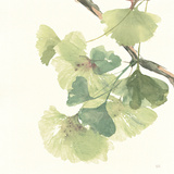 Gingko Leaves II Light Posters by Chris Paschke