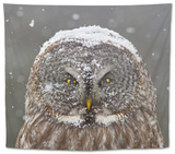 Great Grey Owl Winter Portrait Tapestry by Mircea Costina