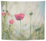 Red Poppy in Field Tapestry by Laura Evans