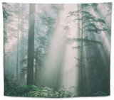 Divine Forest Light, Del Norte Coast Redwoods, Northern California Tapestry by Vincent James