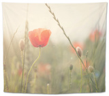 Red Poppy in a Field Tapestry by Laura Evans