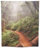 On the Misty Coast Trail at Muir Woods Tapestry by Vincent James
