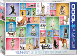 Yoga Dogs 1000 Piece Puzzle Jigsaw Puzzle