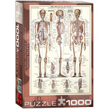 The Skeletal System 1000 Piece Puzzle Jigsaw Puzzle