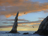Sunset, Brown Pelicans on Rock Formation, Cabo San Lucas, Mexico Photographic Print by Tim Fitzharris