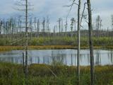 Bog Near North Shore, Lake Superior, Ontario Photographic Print by Tim Fitzharris