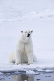 Norway, Svalbard, Pack Ice, Female Polar Bear Photographic Print by Ellen Goff