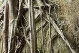 Tree Roots Growing over Bas-Relief on Ta Prohm Temple Ruins, Siem Reap Photographic Print by David Wall