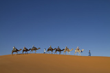 Morocco, Sahara. a Row of Camels Travels the Ridge of a Sand Dune Photographic Print by Brenda Tharp