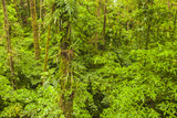 Central America, Costa Rica, Arenal. Rain Forest Foliage Photographic Print by Jaynes Gallery