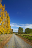 Poplar Trees in Autumn and Road, Near Lovells Flat, South Otago, South Island, New Zealand Photographic Print by David Wall