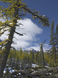 Opabin Plateau, Yoho National Park, British Columbia, Canada Photographic Print by Tim Fitzharris