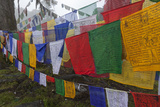 Bhutan. Prayer Flags at the Top of Dochula, a Mountain Pass Photographic Print by Brenda Tharp