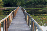 Brazil, Mato Grosso, the Pantanal, Porto Jofre. Bridge over the Giant Lily Pads Photographic Print by Ellen Goff