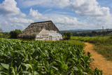 Cuba. Pinar Del Rio. Vinales. Barn Surrounded by Tobacco Fields Photographic Print by Inger Hogstrom