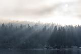 Washington State, Shafts of Morning Light Piercing Fog Make God Rays Through Trees Reproduction photographique par Trish Drury